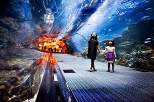 dubai aquarium and underwater zoo tank
