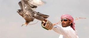 falcon tour abu dhabi