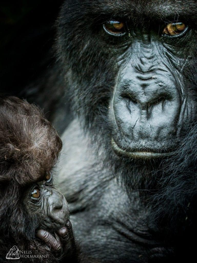 Nelis Wolmarans Wildlife Photgraphic Safari